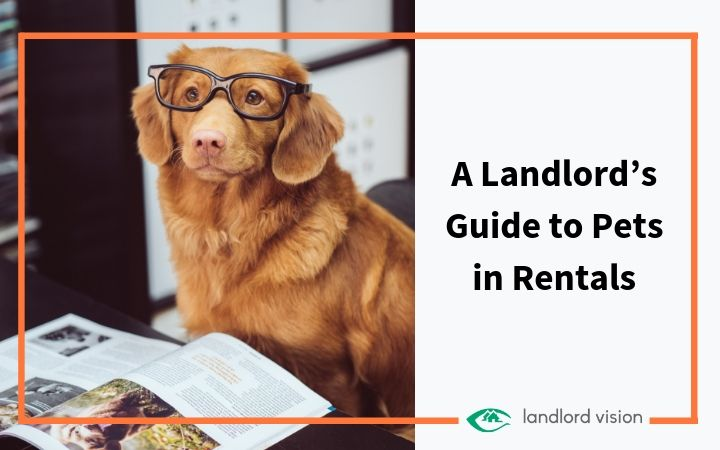 A dog wearing glasses reading a book symbolising a landlord pet guide.