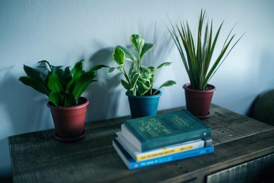 Mood boosting plants in a hallway