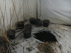 Soil and plant pots left in cannabis farm.